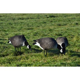 Canada goose decoys fully flocked feeders