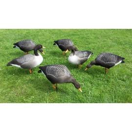 Tanglefree Fullbody Grågæs Flock