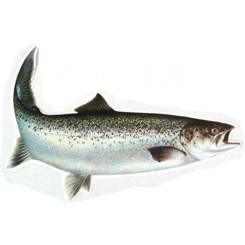 Decal Seatrout 33 cm