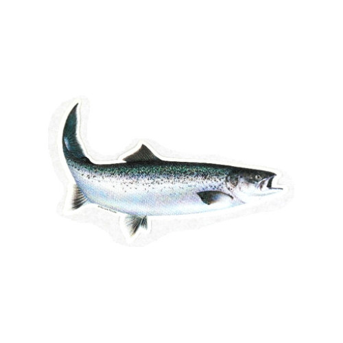 Car decal Seatrout 18 cm