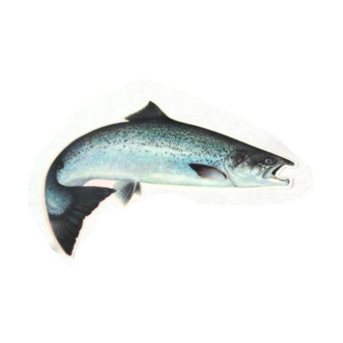 Car Decal Salmon 20,5 cm